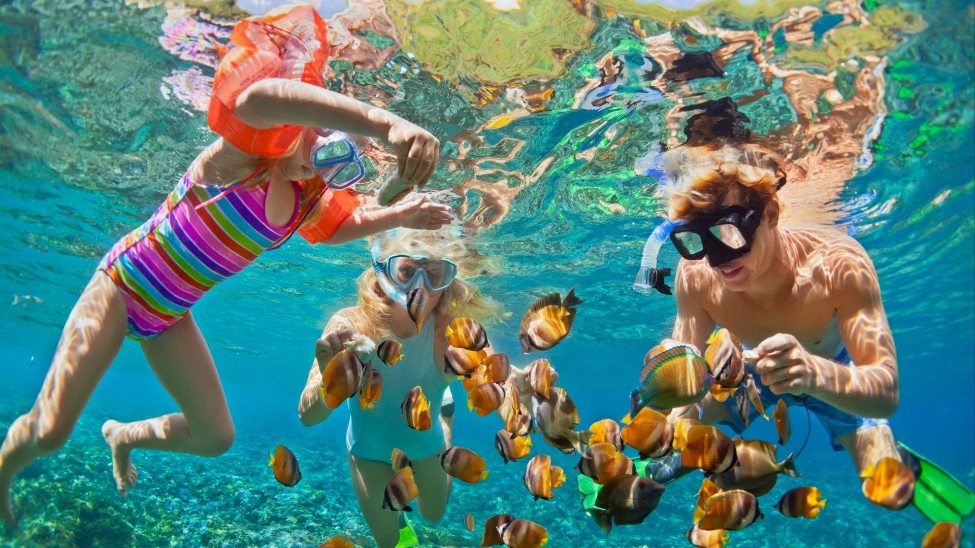 家族で楽しい、サンゴ礁の熱帯魚の中でシュノーケリング
