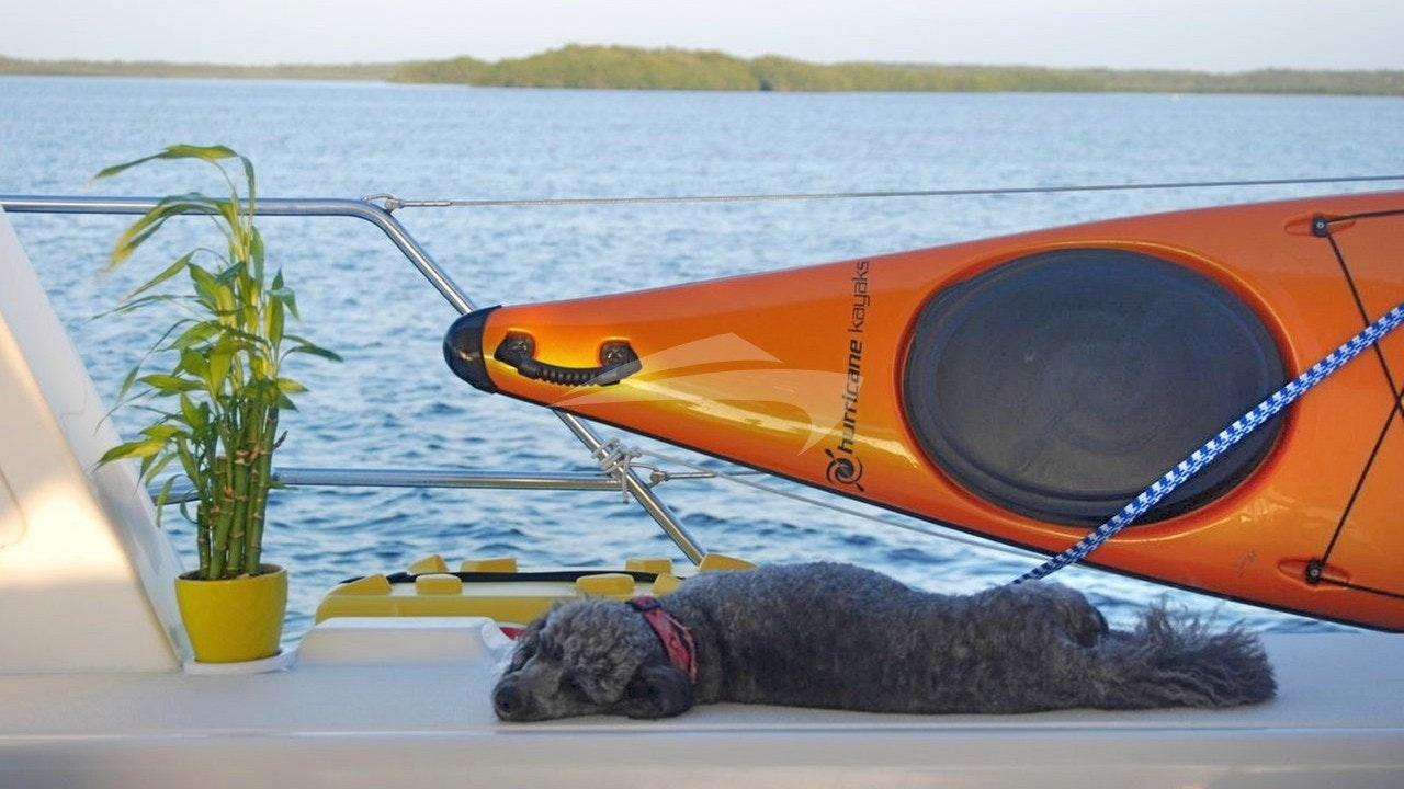 Watch dog Tabasco