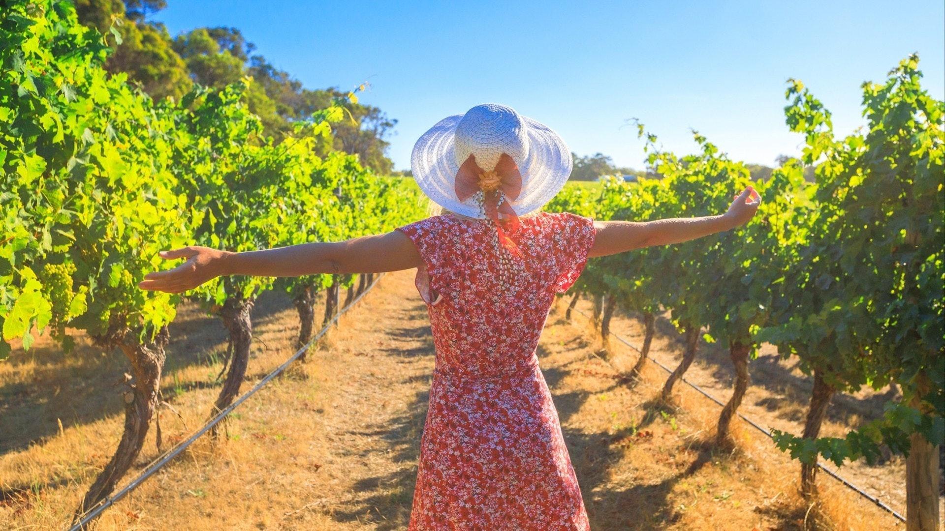 Desfrutando da colheita em Margaret River conhecida como a região vinícola