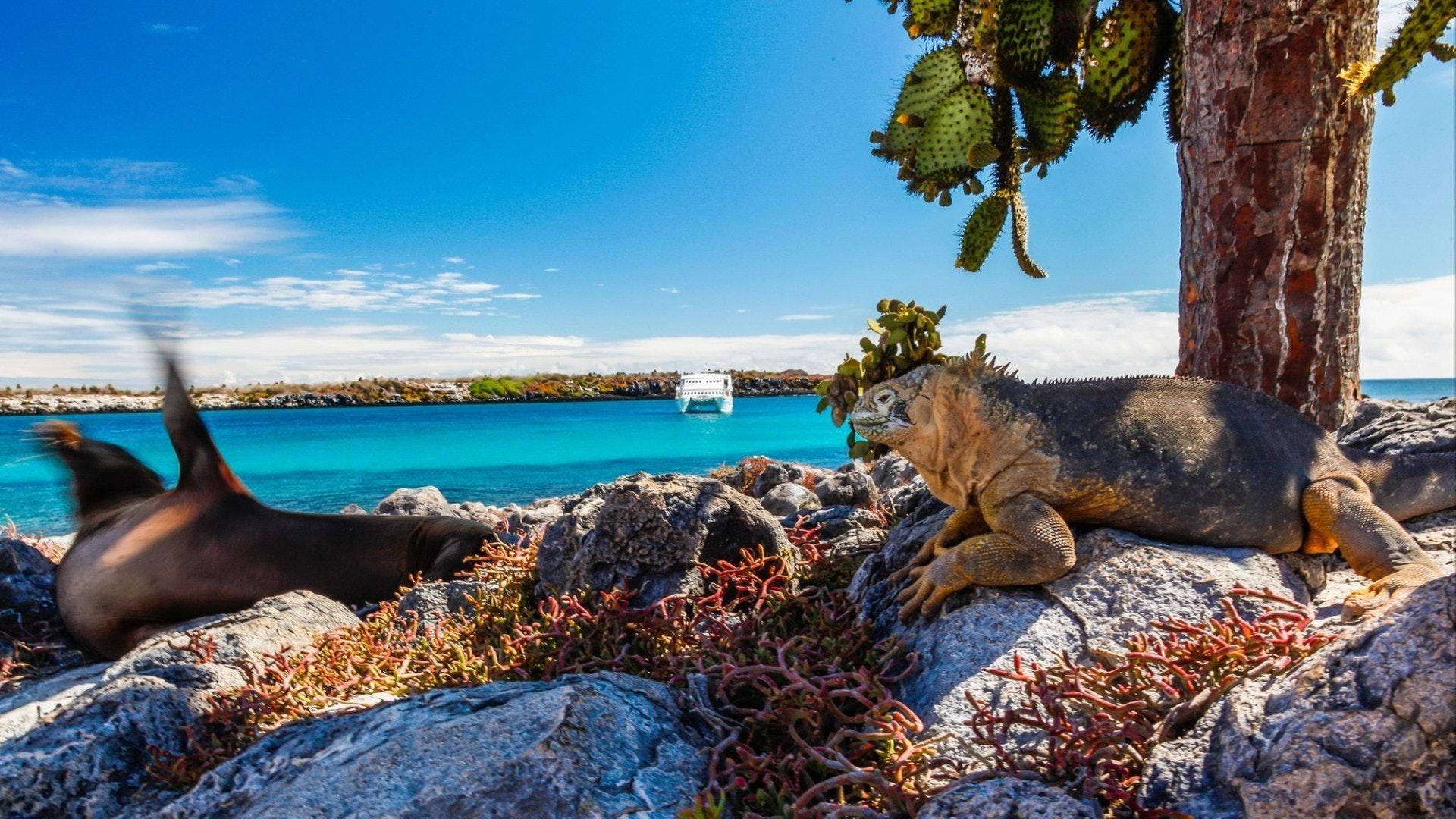 Terra iguana e leone marino muovendo la sua pinna sullo sfondo una barca bianca