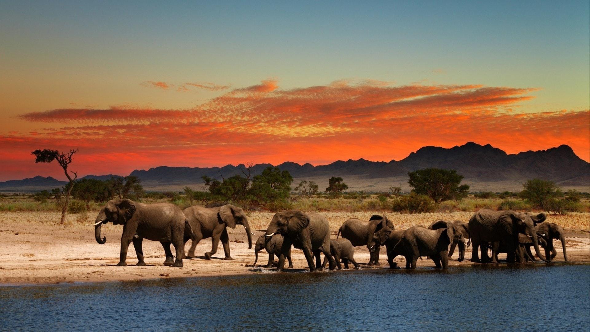 Herd of elephants in African savanna at sunset