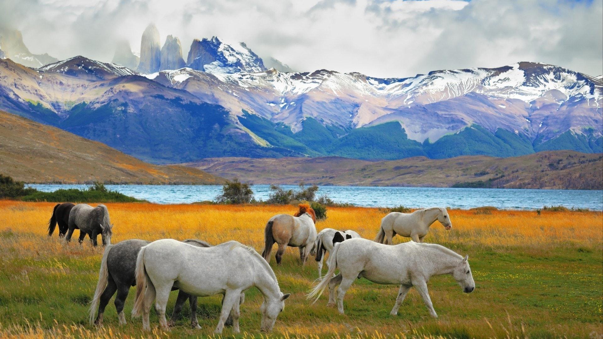 Schöne weiße und graue Pferde grasen auf einer Wiese in der Nähe des Sees. Am Horizont, hoch aufragende Klippen Torres del Paine