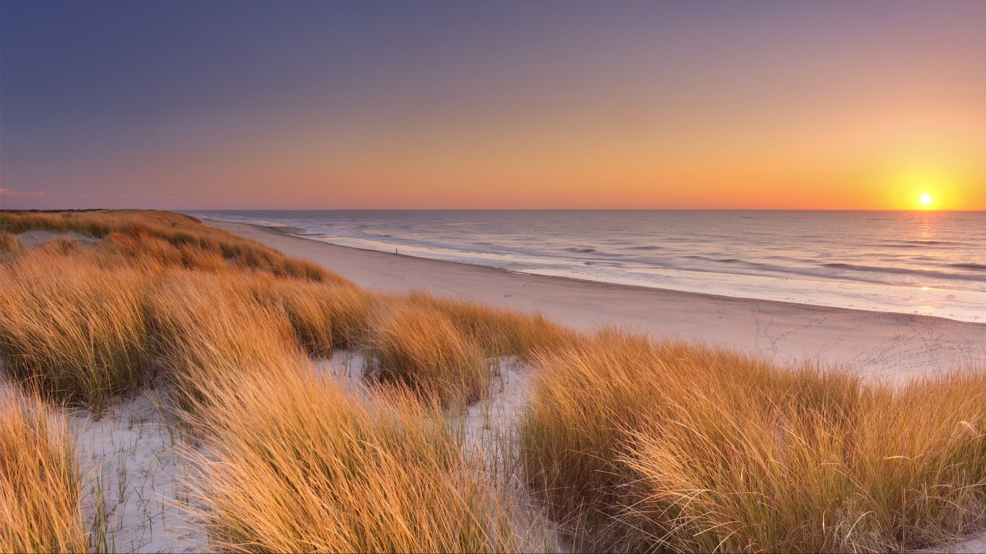 Высокие дюны с дюнной травой и широким пляжем внизу