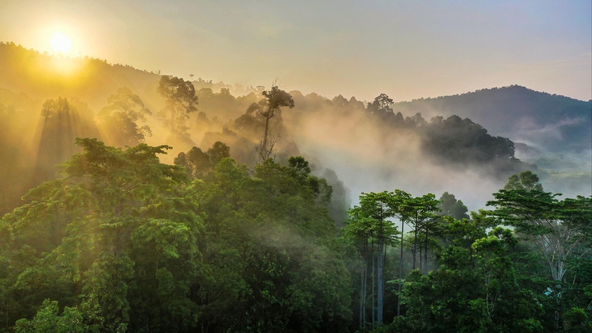Floresta tropical, Vista deslumbrante da Floresta Tropical de Bornéu com névoa e raios de nevoeiro do nascer do sol