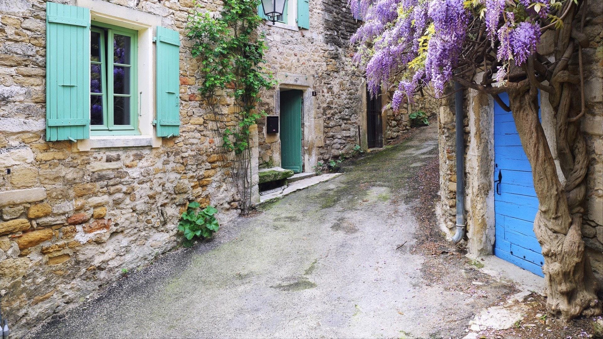 Aldeia de Provença floração roxa Wisteria videira