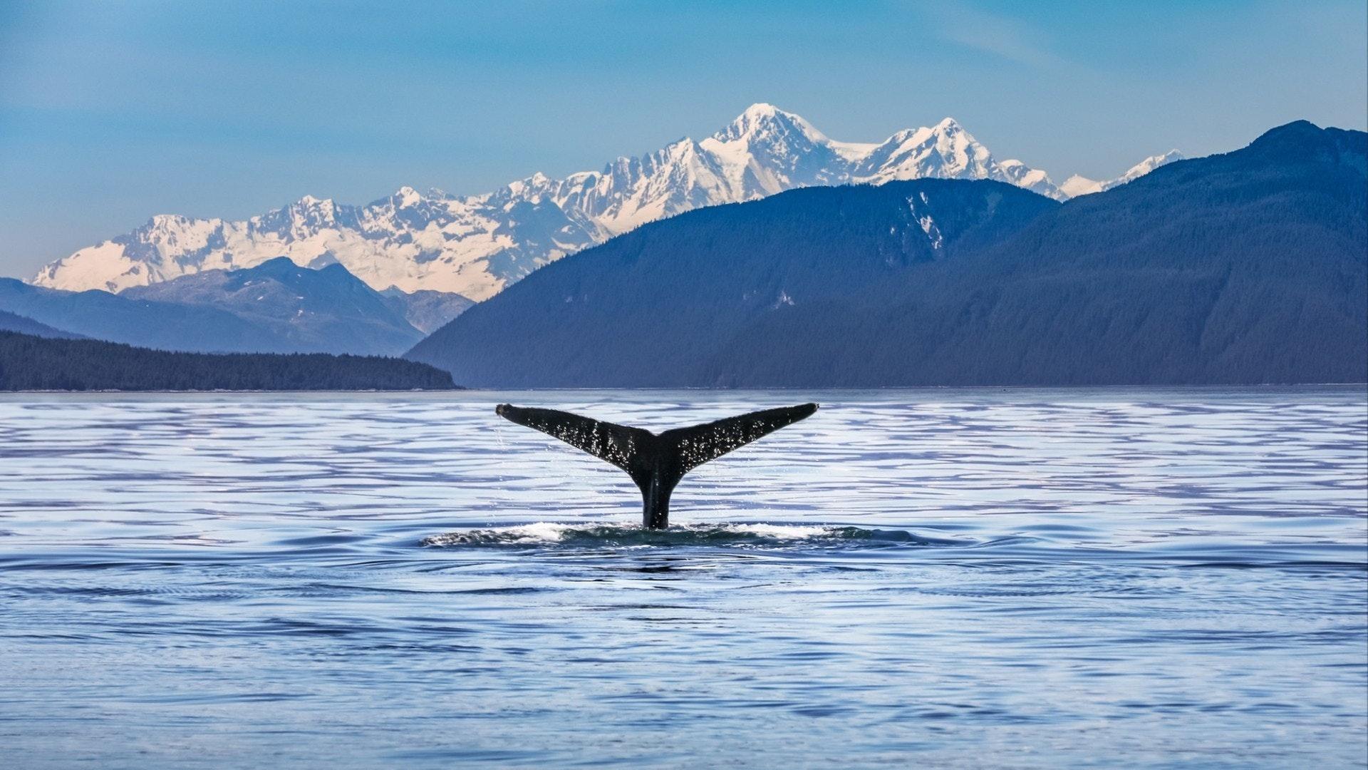 Paysage pittoresque de l'Alaska avec une queue de baleine au premier plan