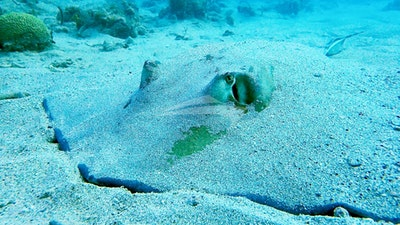 Sneak up on a ray!