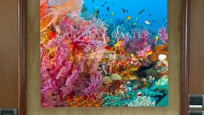 Salon Aquarium