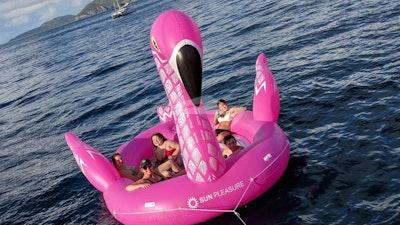 Хихикает, гигантский фламинго!